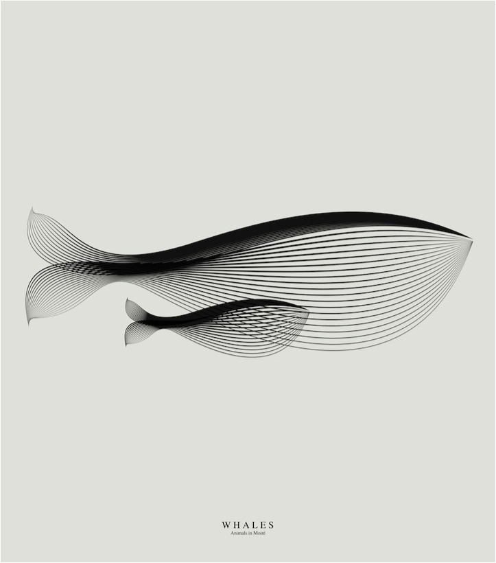 """""""whale poster whale art"""""""
